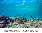 underwater world landscape ... | Shutterstock . vector #565412926