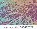 crocodile skin texture.... | Shutterstock .eps vector #565419892