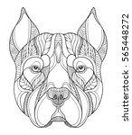 pit bull terrier head zentangle ... | Shutterstock .eps vector #565448272