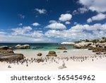 Penguin Colony On The Sunny...