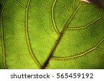 leaves macro | Shutterstock . vector #565459192