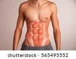 human abdominal muscle. | Shutterstock . vector #565495552