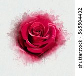 Stock photo red rose blurred watercolours with elements of sketch smudge and spatter paint close up on white 565504432