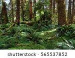 Hoh Rain Forest In Washington...