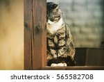 Stock photo sad cat he sits and rests her head on a wooden beam 565582708