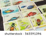 stamp collecting. philatelic.... | Shutterstock . vector #565591396