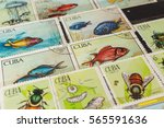 stamp collecting. philatelic.... | Shutterstock . vector #565591636
