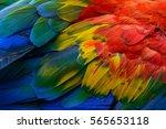 Close Up Of Scarlet Macaw Bird...