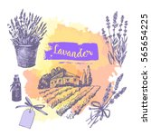 graphic sketches with lavender. ... | Shutterstock .eps vector #565654225