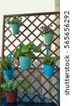 Arrangement Trellises With...