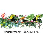 toucans in the tropical forest... | Shutterstock .eps vector #565661176