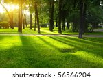 green lawn in city park under... | Shutterstock . vector #56566204