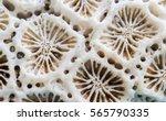 coral texture macro photo.... | Shutterstock . vector #565790335