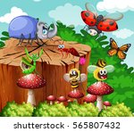 different types of insects in... | Shutterstock .eps vector #565807432