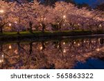 Sakura Cherry Blossoms In Japa...