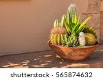 Cactuses Plants Potted In A...