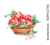 Apple Just Harvested