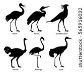 collection of silhouettes of... | Shutterstock .eps vector #565916032