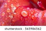 Water Drop On Red Flower Petal...