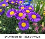Purple Big Flowers In Colorful...