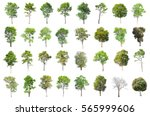 isolated trees on white... | Shutterstock . vector #565999606