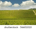 hills with vineyards | Shutterstock . vector #56601010