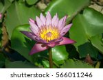 colorful purple water lily  ... | Shutterstock . vector #566011246
