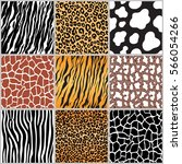 set safari jungle animal fur... | Shutterstock .eps vector #566054266