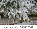 frozen needles | Shutterstock . vector #566062042