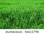 Tall Grass Texture