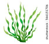 Green Seaweed Watercolor Hand...
