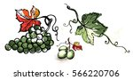 watercolor ripe grape with... | Shutterstock .eps vector #566220706