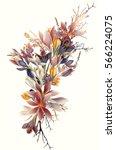 Beautiful Crocus Flowers For...