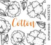 organic cotton bud leaf  flower ... | Shutterstock .eps vector #566253712