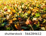 morning sun lights up autumn... | Shutterstock . vector #566284612