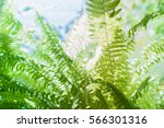 leaf background. fern leaves... | Shutterstock . vector #566301316