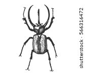beetle  insect species isolated ...   Shutterstock .eps vector #566316472