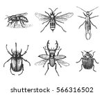 big set of insects bugs beetles ... | Shutterstock .eps vector #566316502