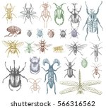 big set of insects bugs beetles ... | Shutterstock .eps vector #566316562
