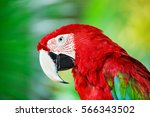colorful portrait of amazon red ... | Shutterstock . vector #566343502