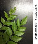 Curry Leaves In Black Background