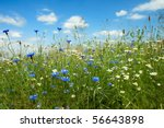 Summer Field With Wild Flowers...
