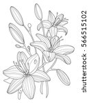 lily flowers coloring book... | Shutterstock .eps vector #566515102