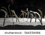 Tiny Eels