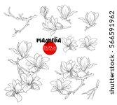 branch of magnolia blossoms.... | Shutterstock .eps vector #566591962