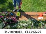 woman with gardening tools... | Shutterstock . vector #566643208