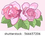 rose illustration in sketchy... | Shutterstock .eps vector #566657206