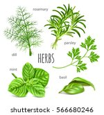 ripe green herbs. collection of ... | Shutterstock .eps vector #566680246