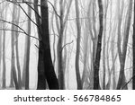 english woodland on a foggy... | Shutterstock . vector #566784865