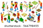 isometric barley farmer people... | Shutterstock .eps vector #566798455